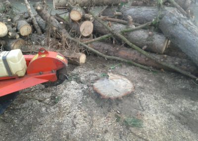 Baumstumpf nach Fällung