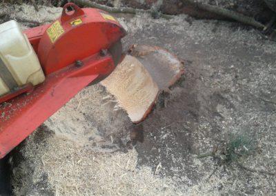 Baumstumpfbearbeitung mit Stubbenfräse