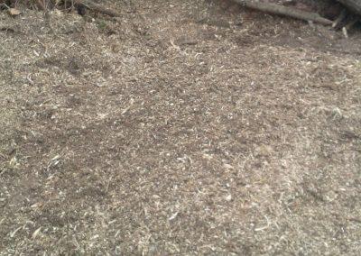 Baumstumpf entfernt